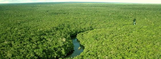 Cikel-Brazilian-Amazon-REDD-APD-Projec